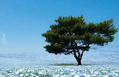 Gökyüzünü Bile Kıskandıracak Kadar Mavi Bir Park