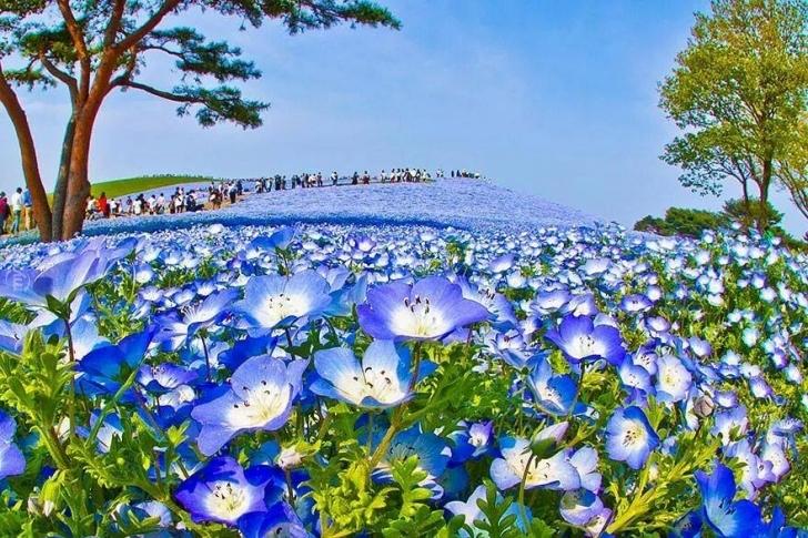 Parkta çiçeklere zarar vermemek için yürüme yolları ayrılmış.
