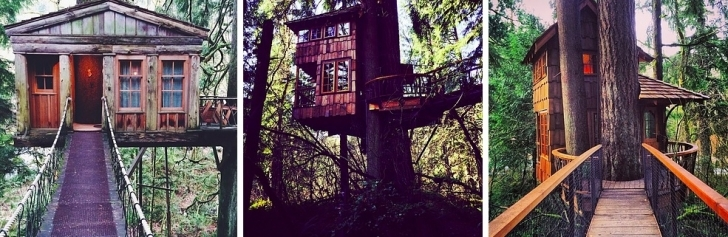 Treehouse Point, Fall City, Washington