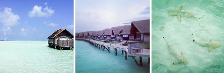 Cocoa Island, Maldivler