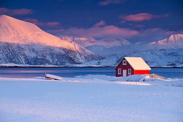 Norveç kırmızısı