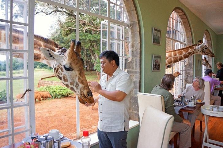 4. Zürafa Oteli - Kenya