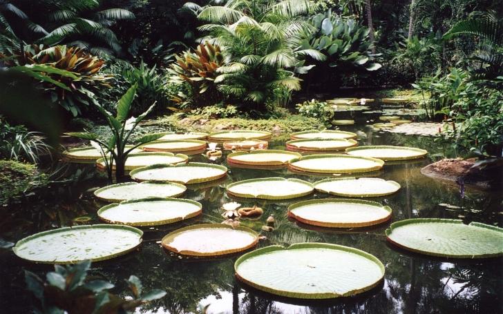 Singapur Botanik Bahçeleri, zaten meşhur olan uzakdoğu bahçe sanatlarının da en güzel örneklerini sergiliyor. Enfes bir doğa, muhteşem bitkiler ve bu dünyadan uzaklaşmak için çok güzel kaçamak!