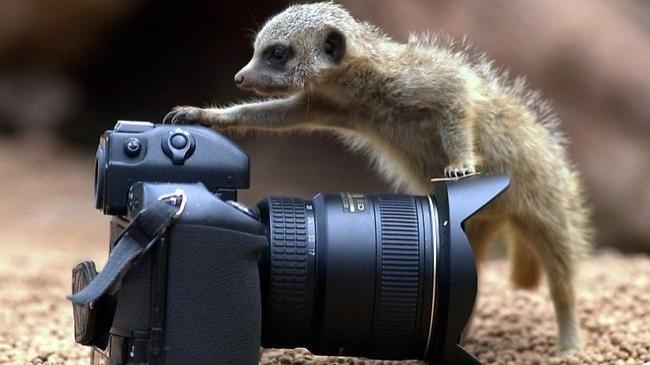 Kusursuz Fotoğraflar Çekebilmek İçin 16 Pratik Yol
