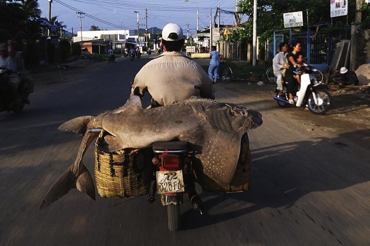Vietnam yollarında milyonlarca motosiklet var.