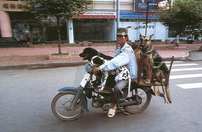 Vietnam'da motorlar her yerde. Ayrıca sadece kendi şeritlerinden gitmiyorlar. Karşı şeride girmeyi bırakın, yolu çaprazlama geçenler bile var.