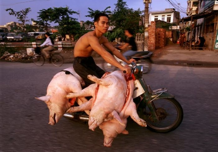 Sokak sokak gezerek domuz satan bir motosikletli satıcı.