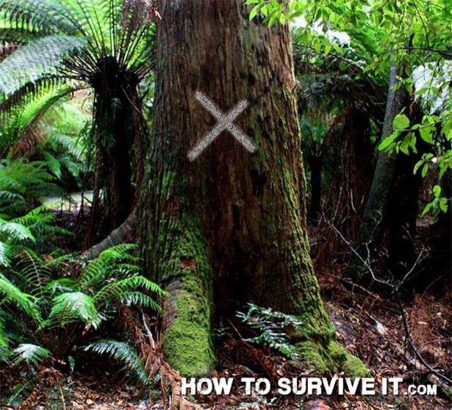 24. Ormanlık yolda yürüyüşe çıkmadan önce yanınıza tebeşir alın ve ağaçları işaretleyin, böylece aynı alanda dönüp durmamış olursunuz.