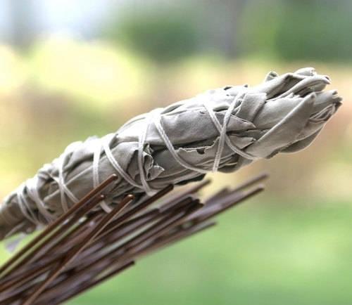 12. Adaçayı bitkisini böcek uzaklaştırıcı olarak kullanın.