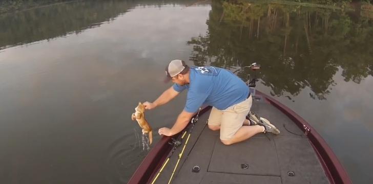 Rastgele: Balık Tutmaya Gitti, Oltasına Yavru Kedi Takıldı!