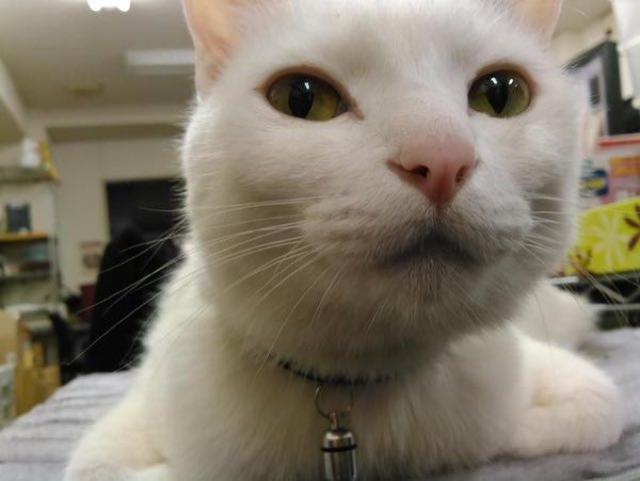 Şirkete Kedi Getirmek Serbest Oldu, Ortalık Minnoş Doldu!