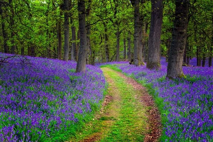 Ormanları kendinden photoshoplu resmen! :)