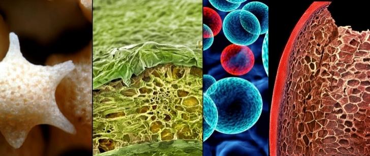Nimetle Oyun Olmaz: Mikroskop Altında Yedikleriniz Nasıl Görünüyor?