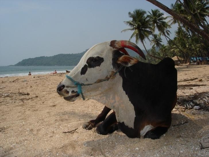 3. Goa, Hindistan