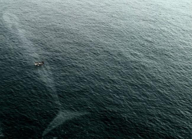 Dünya üzerinde yaşayan en ağır şey mavi balina. Ve evet çok büyük...