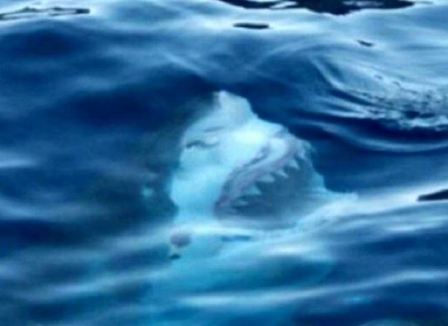 Jaws'tan değil, Photoshop da değil, gerçek!