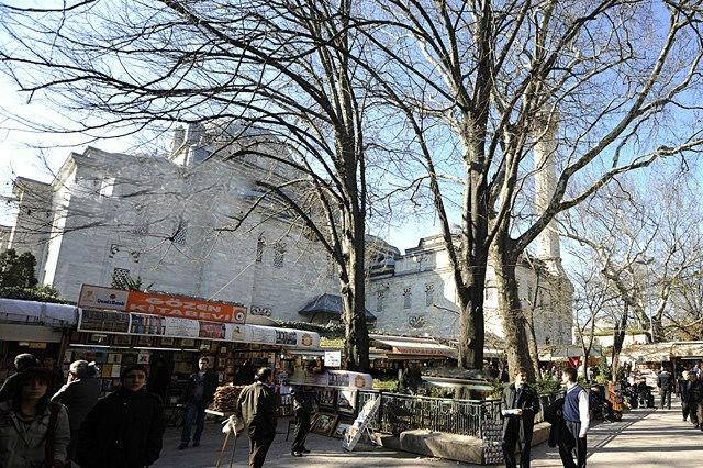 İstanbul'un en eski ağacını ziyaret et!