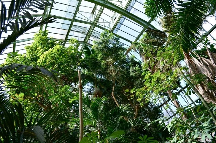 7. Çevre dostları için: The Greenhouses of Paris