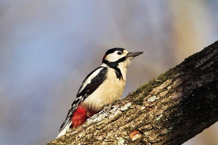 Kuş Sesi, kuşlar alemini seven ve merak edenlere neler sunacak?