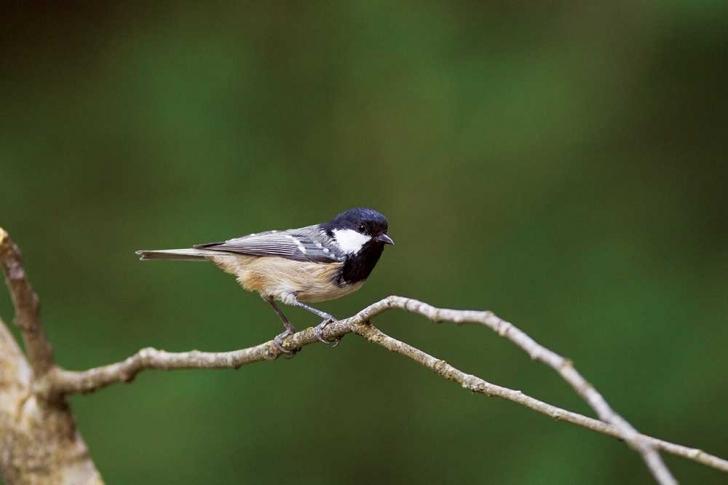 Bültende kuşların göç sayımını yaptığınız anlatıyorsunuz. Kuşları neden sayıyoruz?