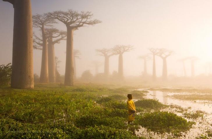 7. Ormanın Annesi, Madagaskar