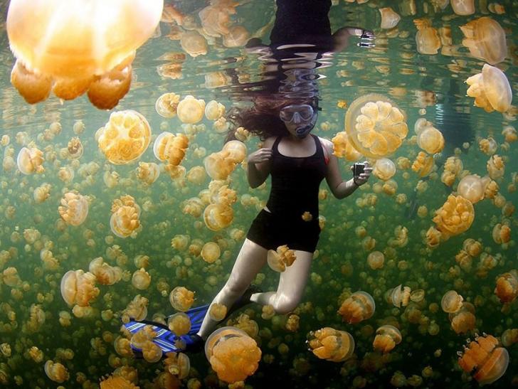 17. Sarı Denizanaları, Palau Rock Adaları