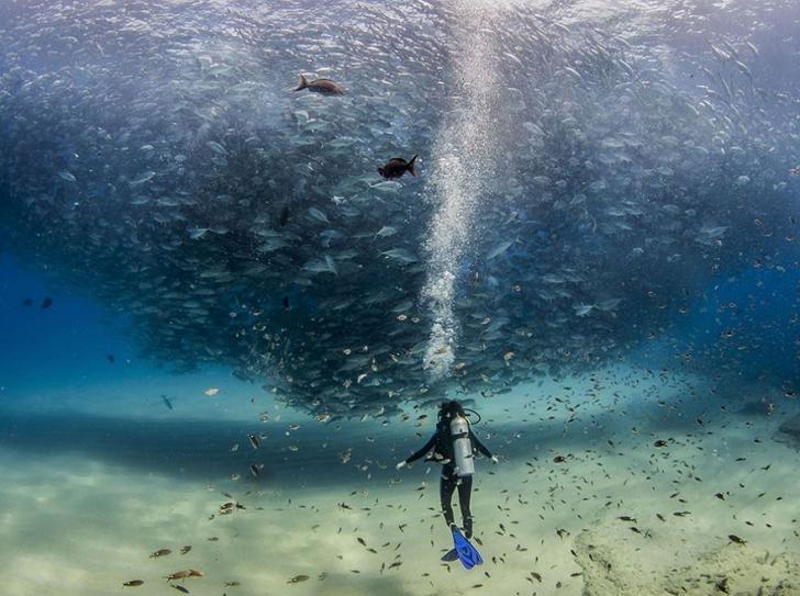 18. Denizdeki Balıklar, Cabo Pulmo