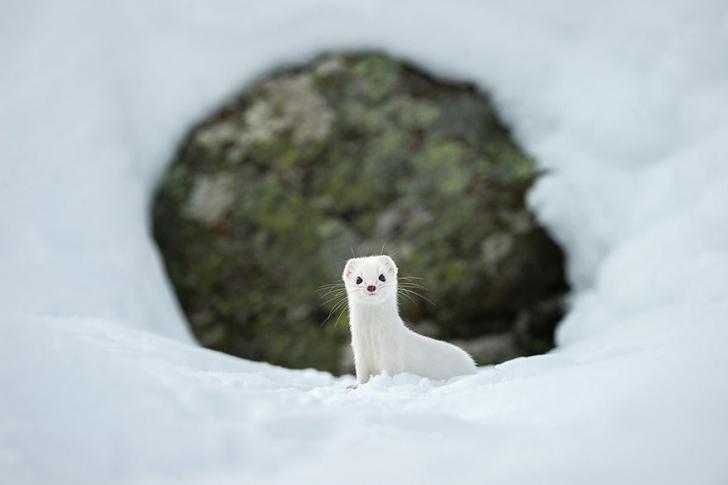 12. Kış Beyazı, Gran Paradiso Ulusal Parkı, İtalya