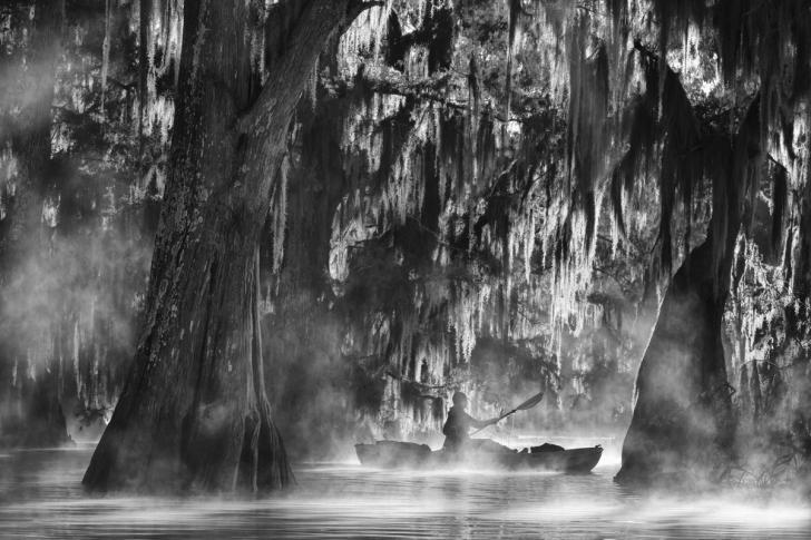 Dev selvi ağaçları boyunca kayak yaparken - Atchafalaya basin, Louisiana, ABD
