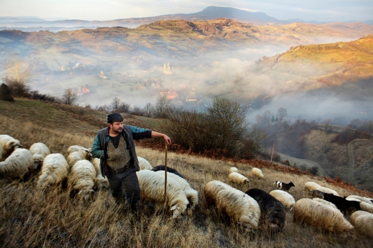 Çobanlık, Romanya