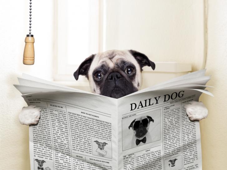 Köpekler Neden Dışkı Yer?