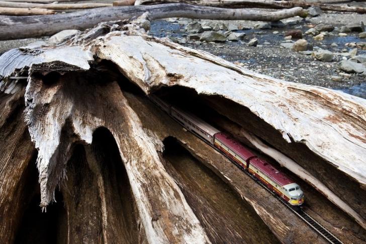Dalgaların kıyıya taşıdığı odun, İngiliz Kolombiyası