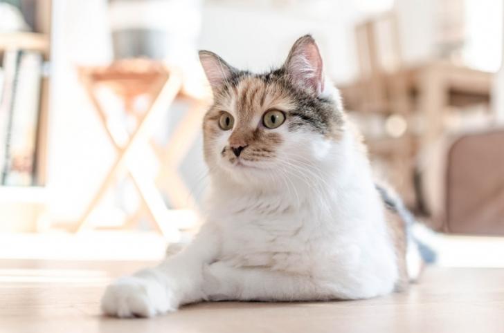 Neden Benekli Kediler Hemen Hemen Her Zaman Dişidir (ve Her Zaman Farklı Görünürler)?