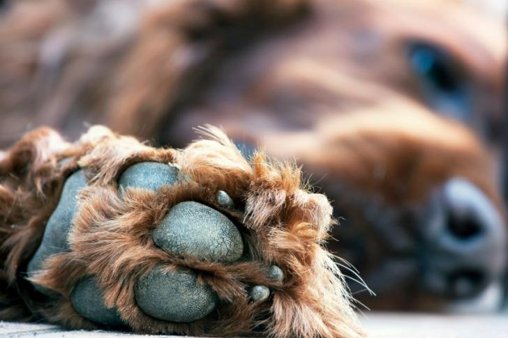 Neden Köpeğinizin Patileri Patlamış Mısır Gibi Kokar?