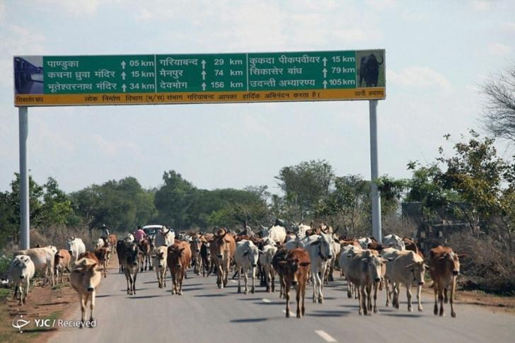 Chhattisgarh, Hindistan