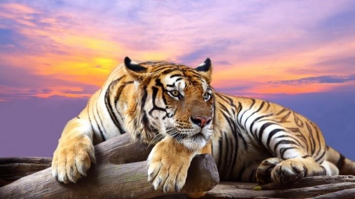 Seyahat Tarzınızı Hangi Hayvan Simgeliyor?