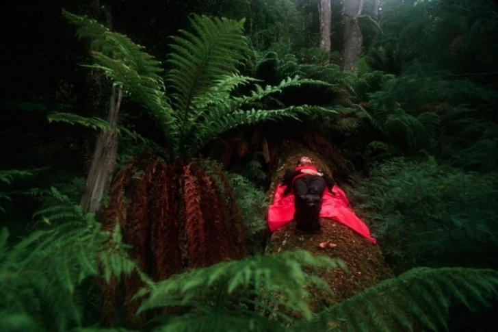Bir yürüyüşçü  Tazmanya Overland yolunda devrilmiş bir ağacın üzerinde dinleniyor.
