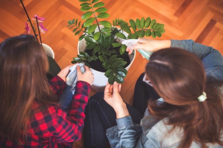 Odanızda Hangi Bitkilere Yer Vermelisiniz?