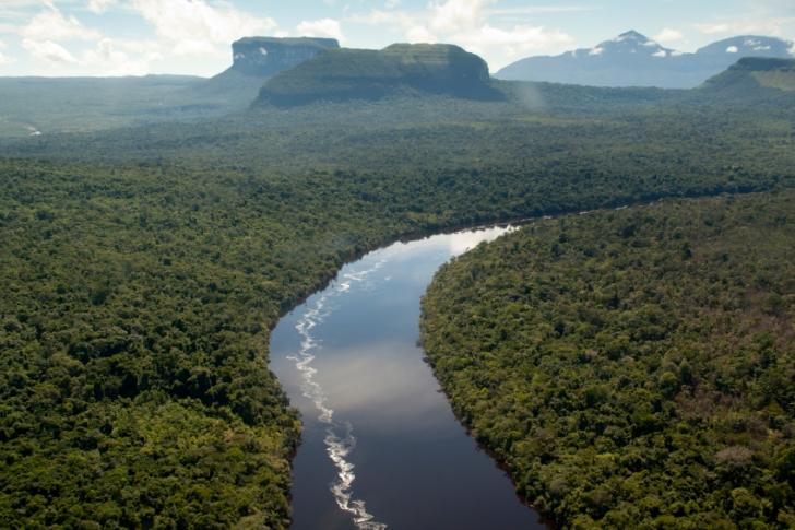 Amazon'da Kaç Tane Ağaç Var?
