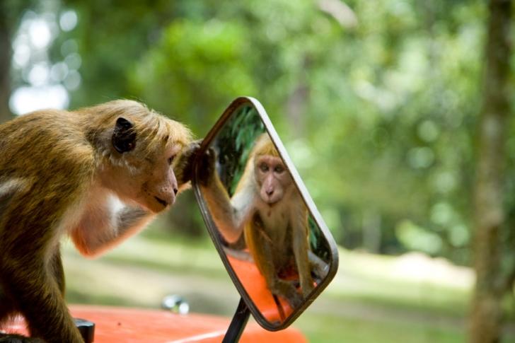 Hayvanlar Aynadaki Yansımalarını Fark Edebilir mi?