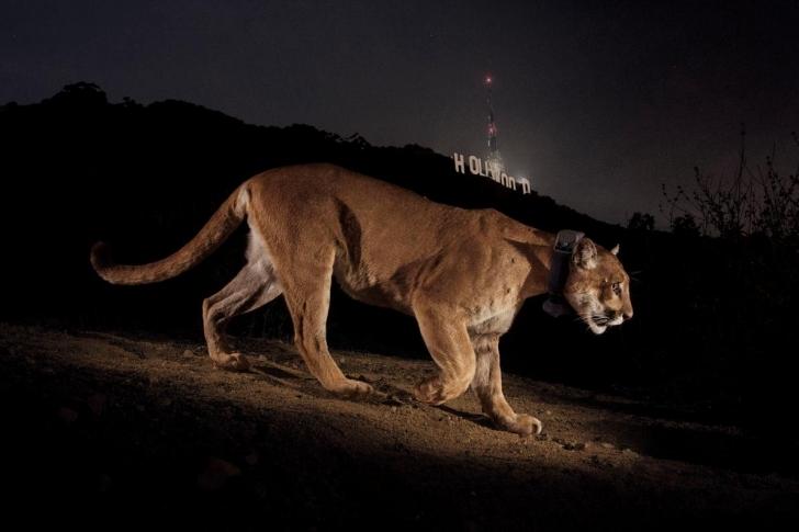Vahşi Hayvanlar Şehirleri Ele Geçiriyor!