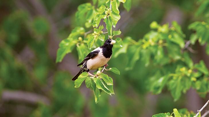 Kuş Cehennemi Otobanı