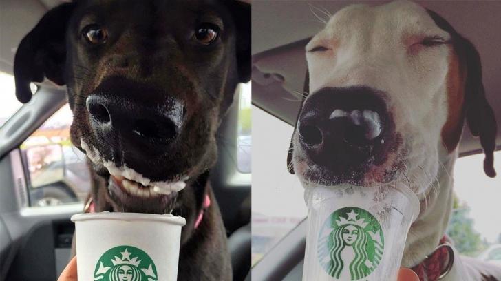 Starbucks'tan Köpeğinize Özel Bir İçecek: Puppucino