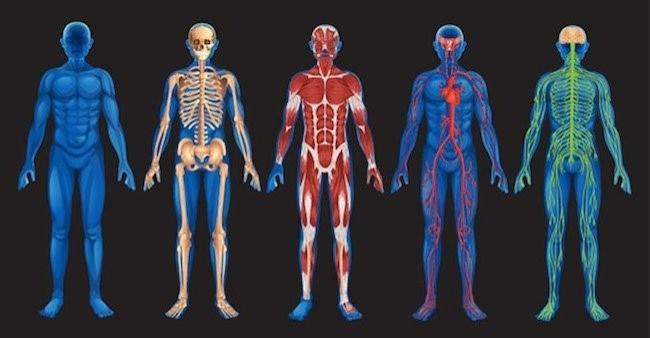 İnsan Vücudu Hakkında Muhtemelen Bilmediğiniz 10 Gerçek